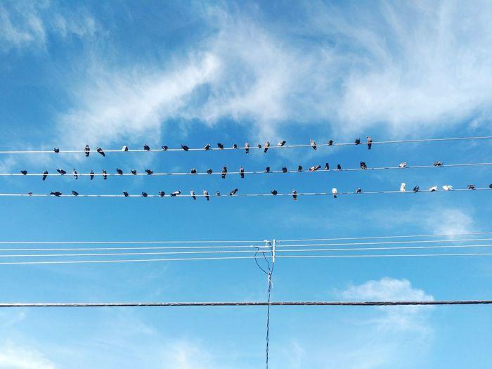 Aves en reposo Bird Birds Bird Photography Eye4photography  EyeEm Gallery Bird Flamingo Telephone Line Flying Blue Cable Flock Of Birds Togetherness Silhouette Electricity  Electricity Pylon Electric Pole