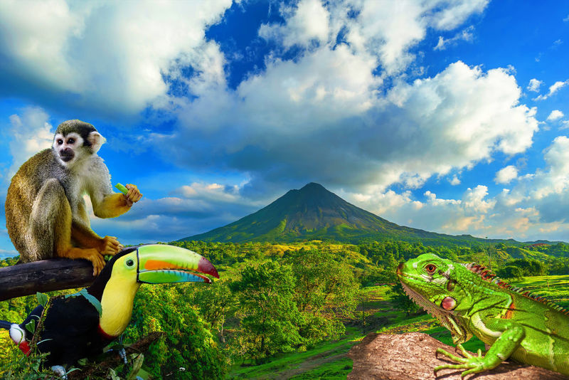The Amazing Costa Rica Costa Rica Green Nature Travel Animals Animals In The Wild Beauty In Nature Illustration South America Tourism Wild Life Photo