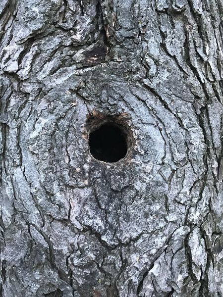 Texture Hole Close-up Tree Rough Nature Eye Brown Tree Trunk Textured  No People Beauty In Nature Outdoors Backgrounds Animal Eye Day Skin Knotted Wood EyeEmNewHere First Eyeem Photo