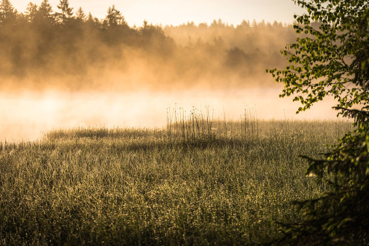 Morning has broken Grass Green Landscape Photography Nature Sunlight Tree Beauty In Nature Environment Fog Foggy Morning Grass Hazy  Lake Landscape Mist Misty Morning No People Outdoors Sky Sunrise Tranquil Scene Tranquility Tree Water