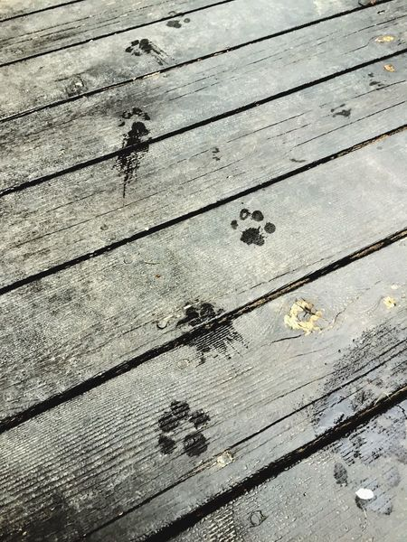 Footprints Pattern Pieces Wood Textures And Patterns Beauty In Ordinary Things Fun Outdoors Dogs Welcome To Black