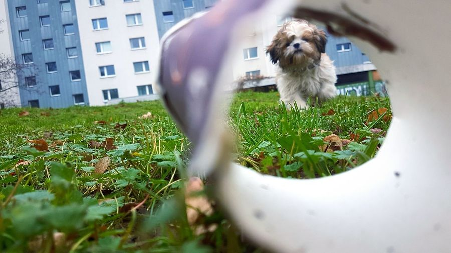 View of a dog looking through plants