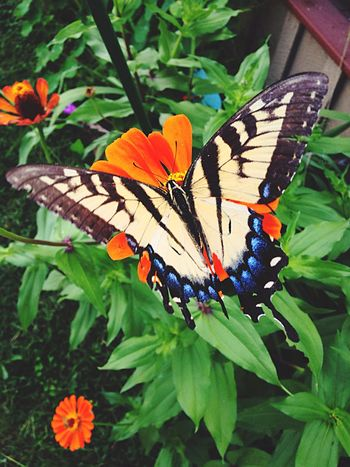 Butterfly - Insect Butterfly Insect Animals In The Wild Plant Animal Themes Nature Leaf Growth Flower Beauty In Nature Day Art Photooftheday Photography