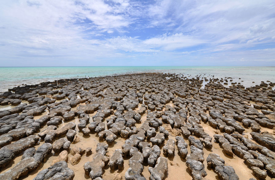 Australia Geology Horizon Over Water Natural Heritage Ocean Old Old Age Stromatolites Tranquil Scene