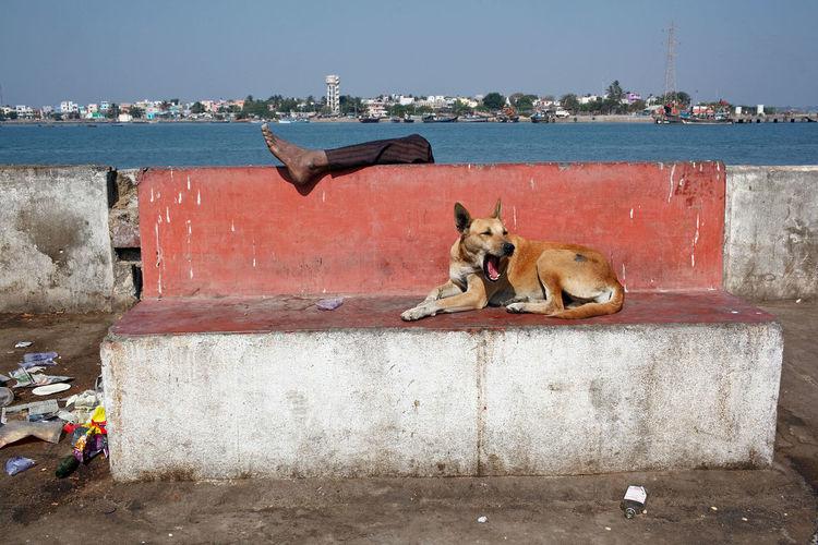 A yawning dog in Douglas, India. Streetphotography Street Photography India Dog Street