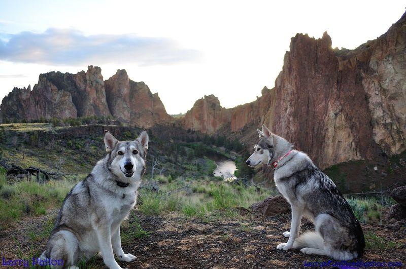 Siberian Huskies Sitting On Field Against Rock Formations
