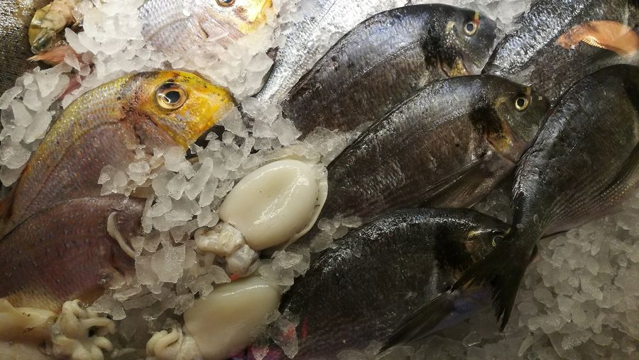 High angle view of seafood on crushed ice for sale
