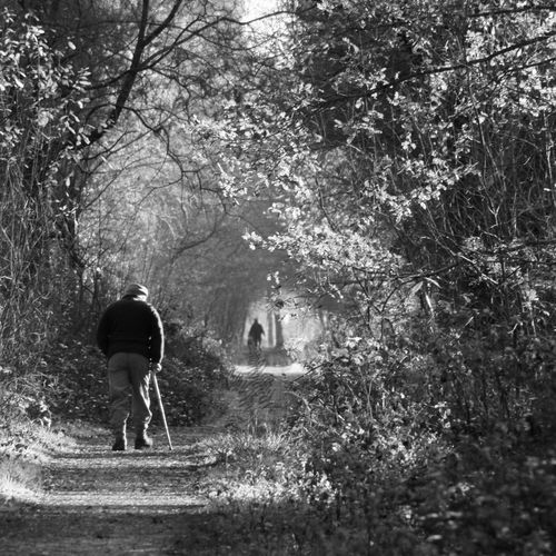 Rear view of senior man walking on road amidst trees