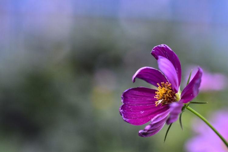 Purple flower blooming outdoors