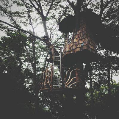tree house Treehouse Photo Cafe はまぐり堂