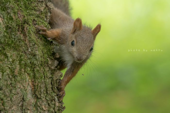 元気なエゾリス Squrriel Nature Animal Nature Photography Wild Animal Animals Hokkaido Japan 北海道 野生動物 エゾリス Green Cute Summer Squirrel
