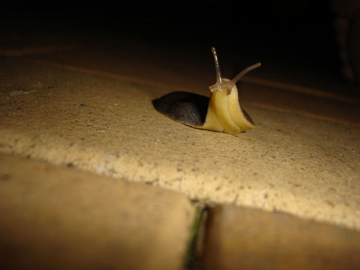 Animal Antenna Animal Themes Animals In The Wild Close-up Head Raised Insect Nature No People One Animal Outdoors Slug Wildlife