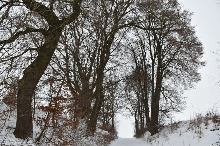Low Angle View Snow Cold Temperature Silence Tree