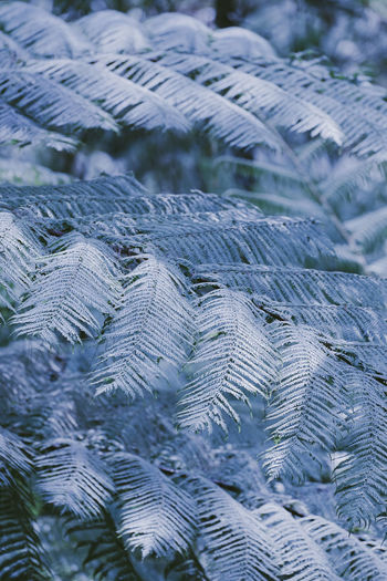 cold tone pine forest Leaves Pine Tree Pine Leaves Cold Cold Tone EyeEm Nature Lover EyeEmNewHere LembangBandung EyeEm Selects Tree Twigs White Nature Nature Beauty Water Backgrounds Pattern Full Frame Close-up Growing Branch