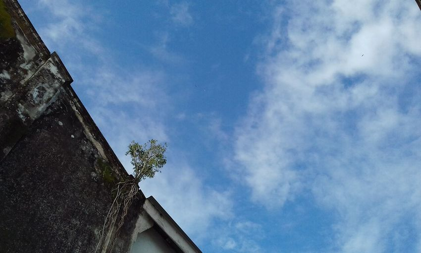 Architecture Sky Built Structure Cloud - Sky Low Angle View Building Exterior Roof Blue No People Day Outdoors Tree EyeEmNewHere Naturephotography Livethelittlethings The Week On EyeEm Fotofon Originalpicture Unedited Photo