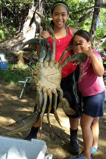 Nice Catch Massive Samoan Crabb