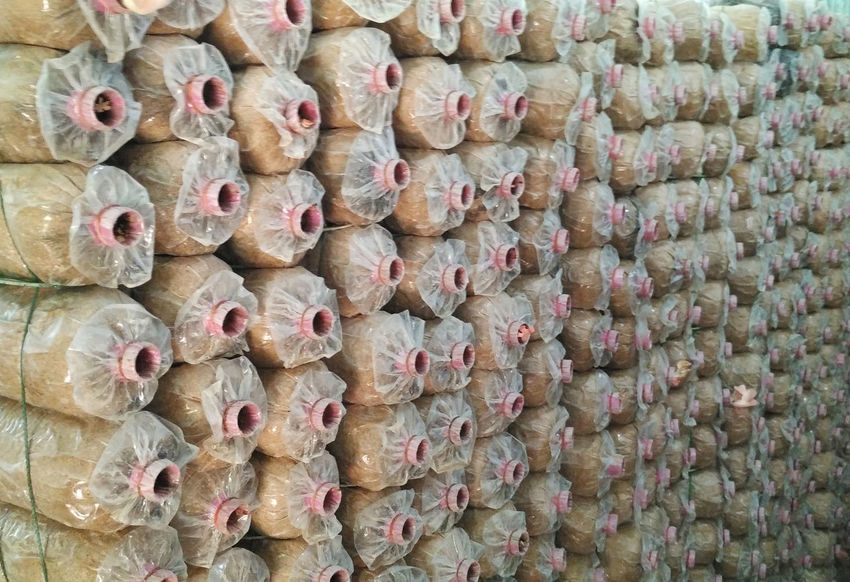 Mushrooms 🍄🍄 Abundance Architecture Backgrounds Chinese Food Choice Close-up Day Food Food And Drink Freshness Full Frame In A Row Indoors  Ingredient Large Group Of Objects No People Order Pattern Repetition Snack Travel Destinations