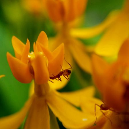 Insect Ants On A Flower Ants Close Up Plant Close-up Nature Flower Beauty In Nature Samsung Galaxy S5 Fragility Flower Head No People Yellowflower Orlando Orlando Florida