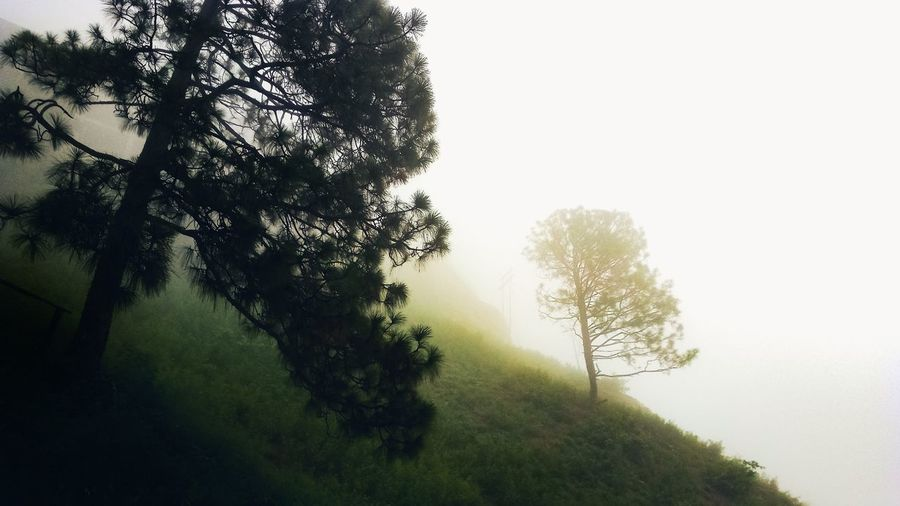 foggy dayout Naturephotography EyeEm Best Shots Tree Branch Fog Forest Water Lake Rural Scene Sky Grass Landscape Foreground Leaf Vein Plant Life Tranquil Scene Treetop Streaming Lush Foliage Growing Willow Tree Countryside Foggy Tree Trunk Tranquility Calm Lush - Description Scenics My Best Photo