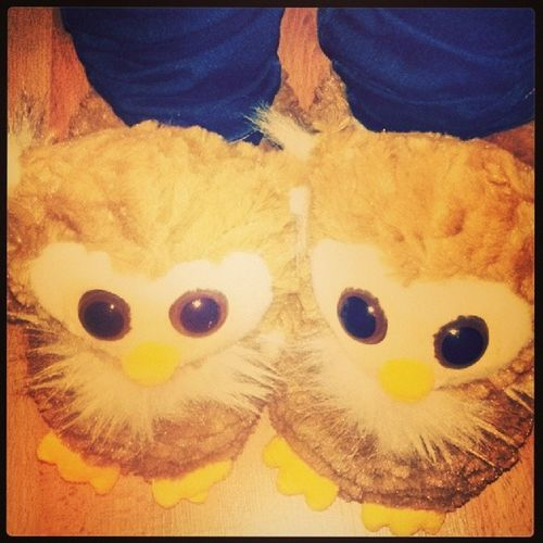 Owl Cute My Hedwig slippers color