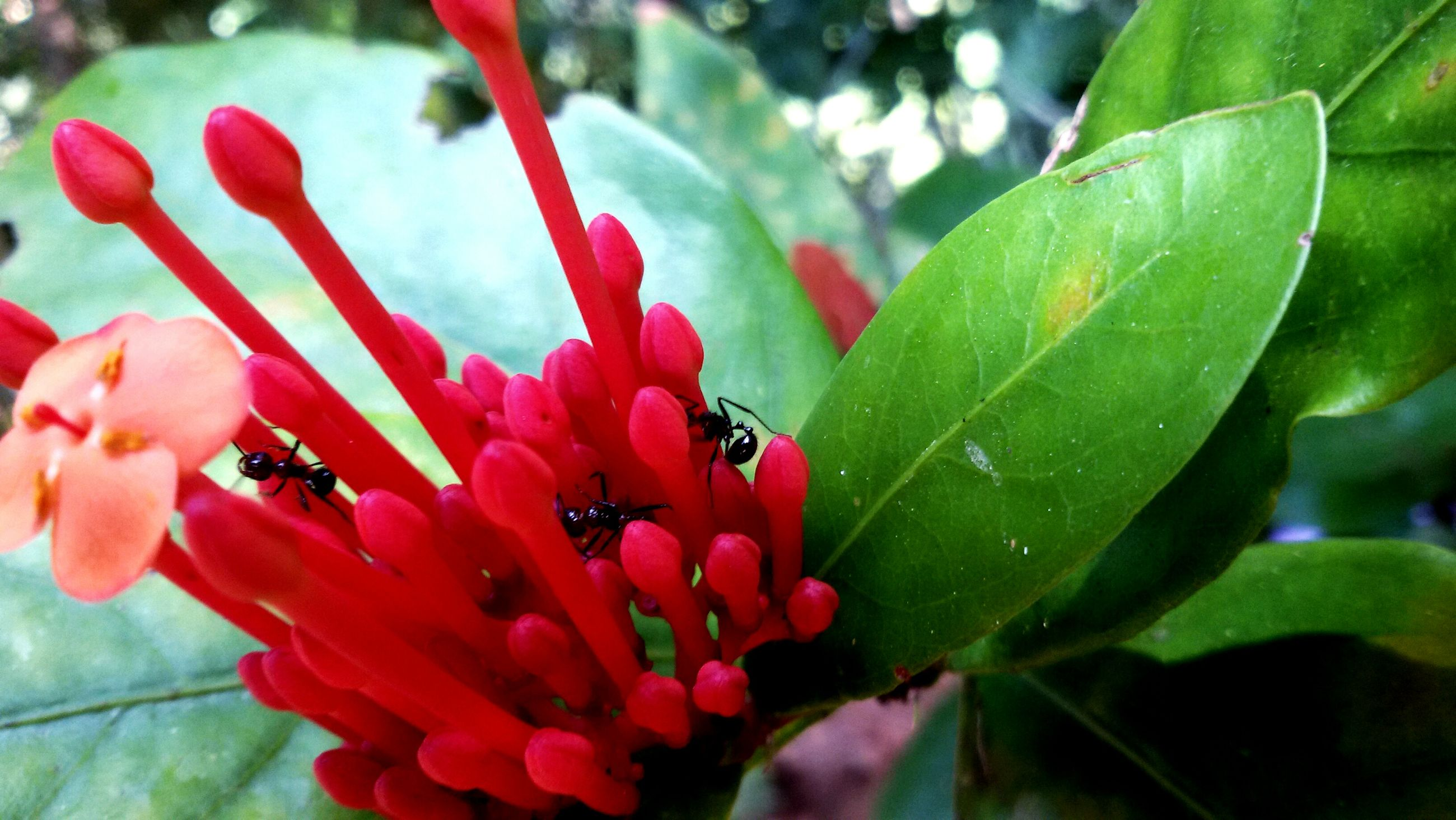 leaf, flower, focus on foreground, growth, close-up, freshness, petal, plant, red, nature, fragility, beauty in nature, pink color, bud, green color, day, flower head, outdoors, selective focus, stem