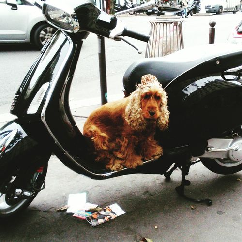 Capture The Moment Paris Dog Dog With Hat On A Scooter Uncommon  FUNNY ANIMALS Funny Moments