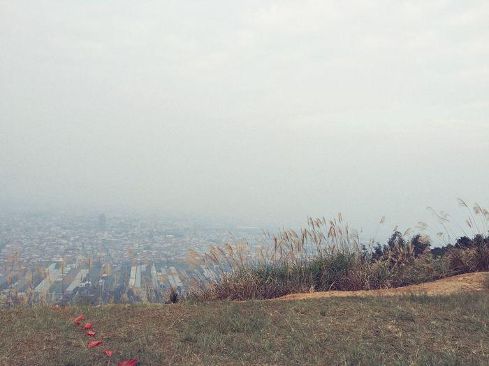 Fog Sky Nature