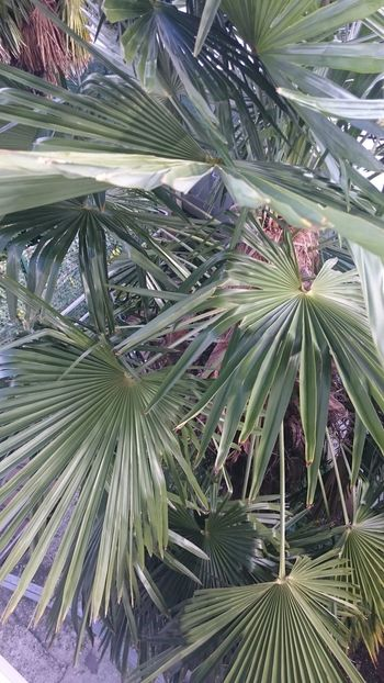 Palm Tree Palm Green Green Color Plant No Filter
