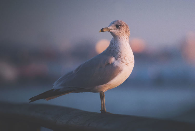 different tone Bird Animal Themes Animal Animal Wildlife One Animal Animals In The Wild Vertebrate Focus On Foreground Close-up Perching No People Seagull Day Nature Sea Looking Away Beak Sea Bird Looking Outdoors