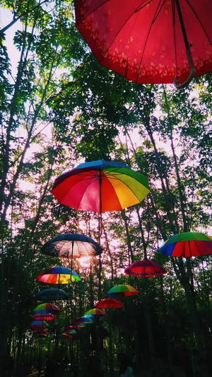 Umbrella In The
