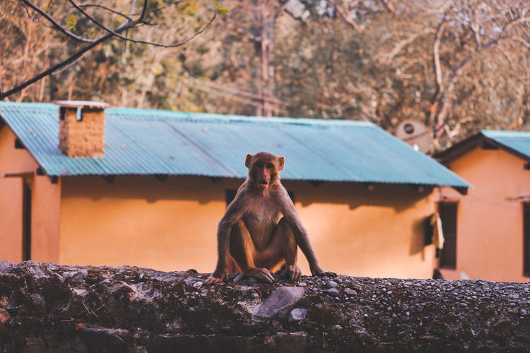Shine Sunlight And Shadow Monkey India Animal Themes Adventures In The City Animal Wildlife EyeEmNewHere Animal Themes