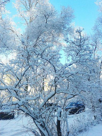 Snow ❄ Beautiful Nature Mymorning ❤❤❤