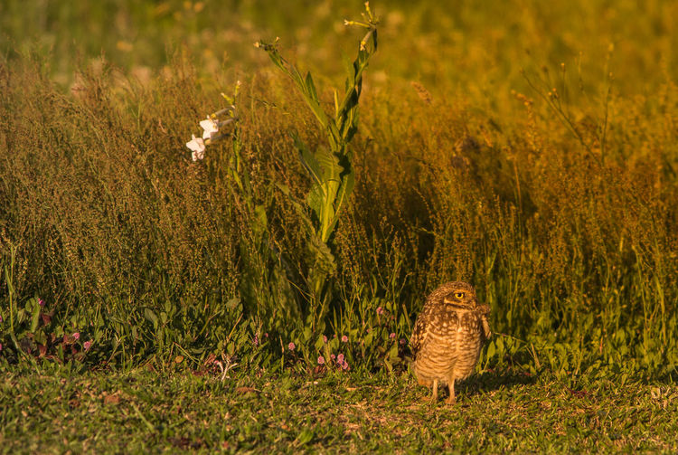 Owl Animal Themes Beauty In Nature Bird Day Field Flower Fragility Grass Growth Horizontal Nature No People Outdoors Owl Plant