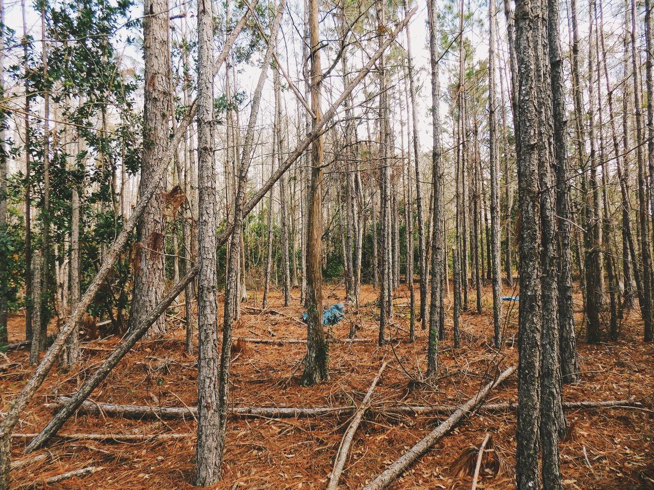 MAN ON TREE TRUNK