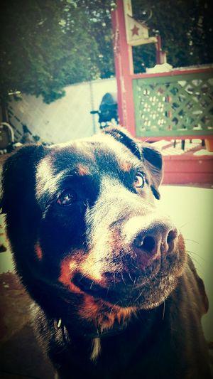 my dog zeus