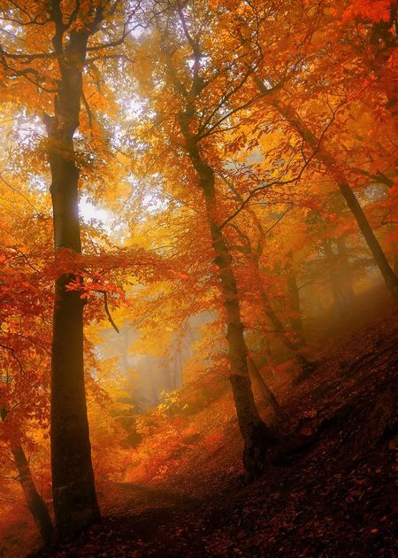 Autumn Tree Leaf Nature Forest WoodLand Sunbeam Scenics Fog Change Sunlight Beauty In Nature Morning Environment Sunset Tree Trunk Outdoors Rural Scene Tranquil Scene Red