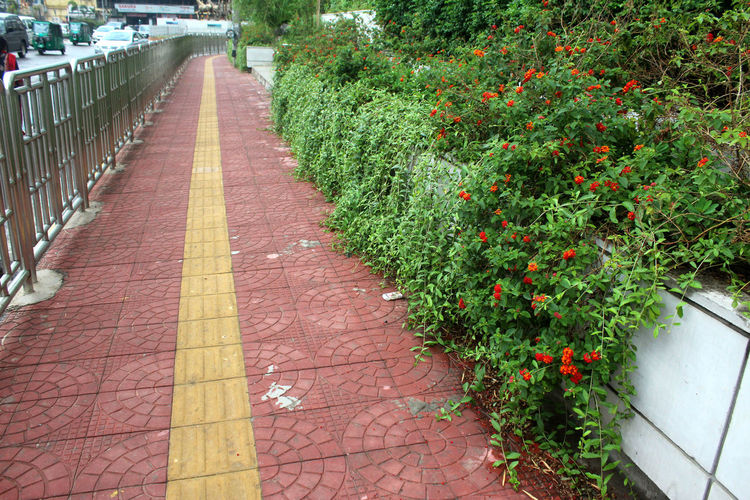 Day No People Direction The Way Forward Outdoors Road Plant Footpath Growth Nature Sidewalk Diminishing Perspective Railing Green Color Tree In A Row Flower Beauty In Nature Architecture Flowering Plant Paving Stone Garden Path