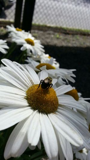 Nature Bee Macro Nikon