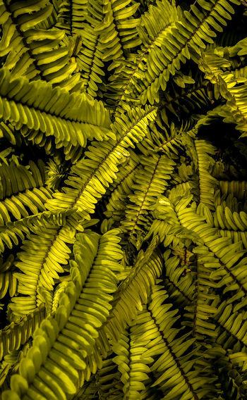 green leaf in