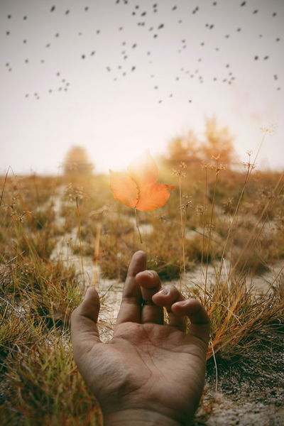 Madewithpicsart Getty Getty Images EyeEm Best Shots VSCO EyeEmNewHere Lightroom Human Body Part Human Hand One Person Nature Sky Flying Grass Sunset Autumn Bird Flock Of Birds Day Gold Colored Summer Outdoors