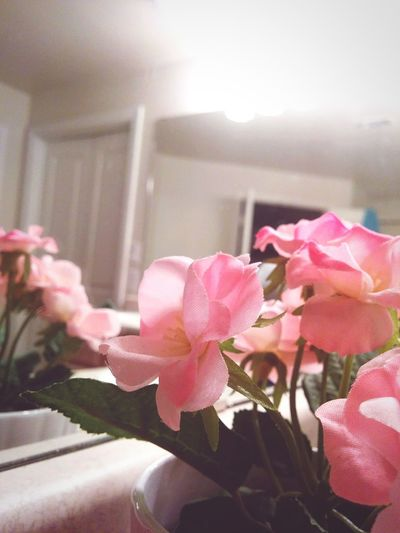 In the Path of Love there are Musked Roses and Crimson Skies.. Pink Flowers Flowerlove Rose♥