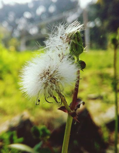 Focus On Foreground Nature Close-up Plant Day Spider Web Outdoors Flower Fragility Flower Head Freshness Growth