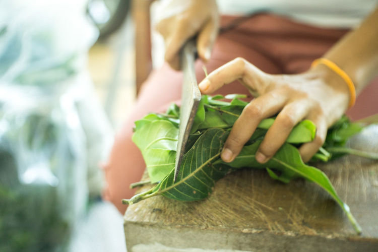 Close-up Focus On Foreground Food Food And Drink Freshness Green Color Hand Healthy Eating Herb Holding Human Body Part Human Hand Leaf Midsection One Person Plant Part Preparation  Preparing Food Selective Focus Vegetable Wellbeing Women