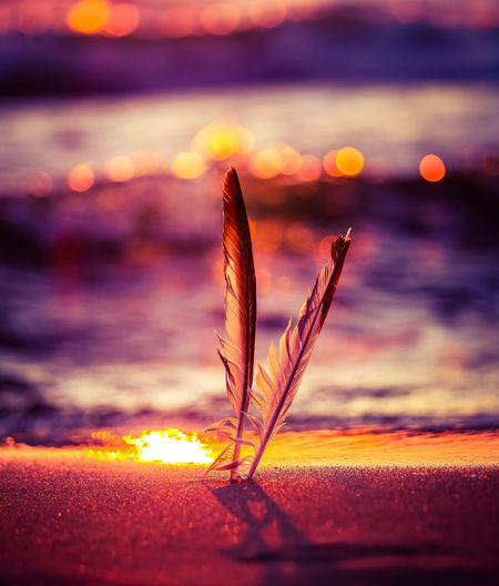 A beautiful seagull feathers in the sand on the beach of baltic sea. vibrant beach scenery.