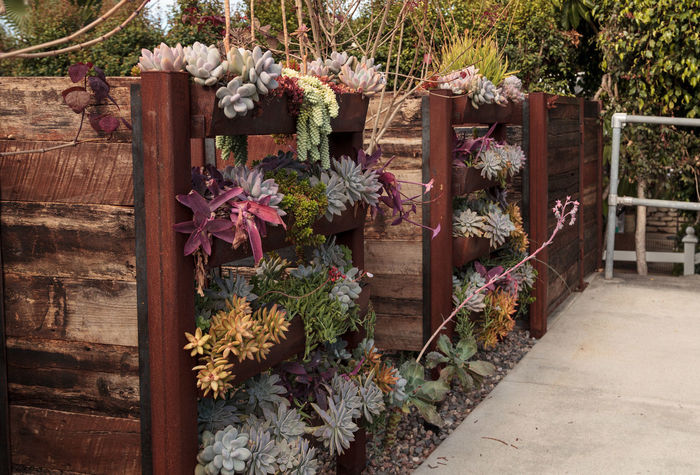 Vertical garden planted wall with shelves to hold multiple green and red succulent plants. Botanical Day Flower Garden Garden Wall Nature No People Outdoors Plant Plants Shelf Shelves Succulents Vertical Vertical Garden