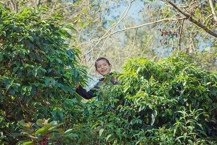 La magia del café Coffee Naturaleza Green Colorful Landscape Smile Instagram_kids