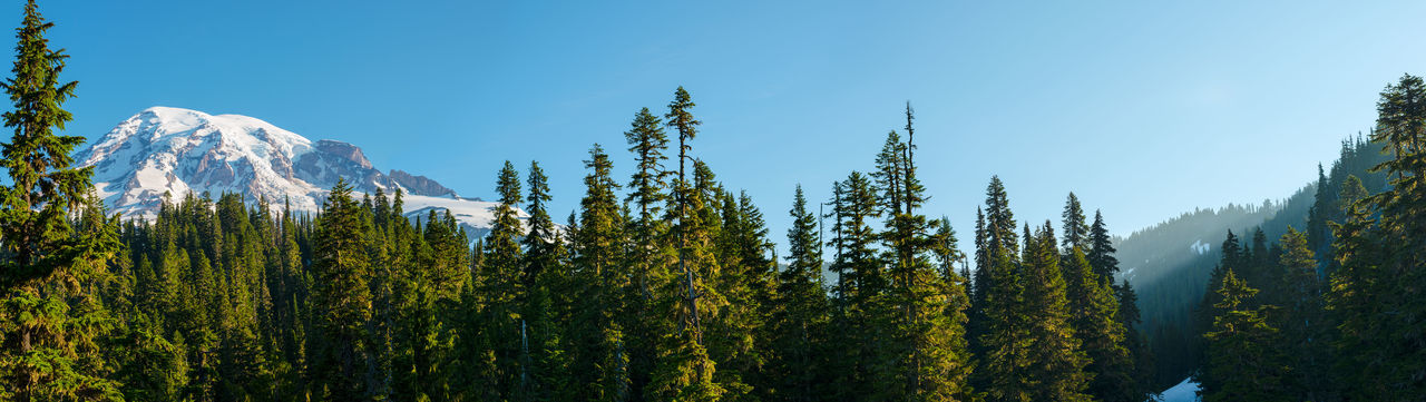 Forest and Mount Rainier at Mount Rainier National Park, Washington State, USA Mount Rainier Mount Rainier National Park National Park Nature Panoramic View Trees USA Washington State Cascades Mountains Forest Landscape Mountain Mountain Range Sunrise
