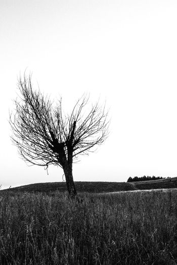EyeEmNewHere Landscape Bnw Bw Blackandwhite Blackandwhitephotography Czarnobiałe Nature Growth No People Rural Scene Tree Outdoors Sky