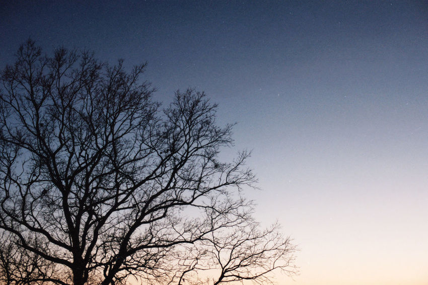 Analog Analogue Bare Tree Day Denmark Emotion Energy Film Filmisnotdead Georgian Kodak Lashafox Mood Nature No People Outdoors Pastel Photographer Sad Silhouette Sky Snoghoj Tree Treetop Tsertsvadze