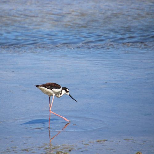 Animal Wildlife Animal Themes Animal Animals In The Wild Bird Vertebrate One Animal Wading